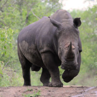 HLUHLUWE AND IMFOLOZI GAME RESERVE
