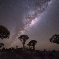 Quiver trees (Kokerbooms) under the Milky Way in Southern Namibia.