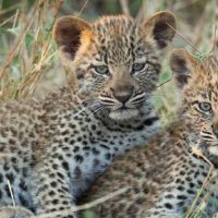NGALA PRIVATE GAME RESERVE4