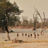SOUTH LUANGWA NATIONAL PARK2
