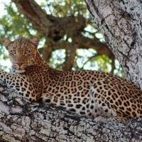 SOUTH LUANGWA NATIONAL PARK4