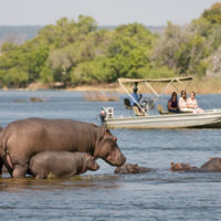 SOUTH LUANGWA NATIONAL PARK7